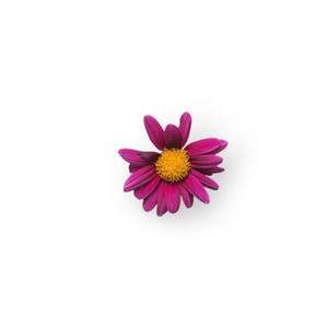 Cut Flower 9