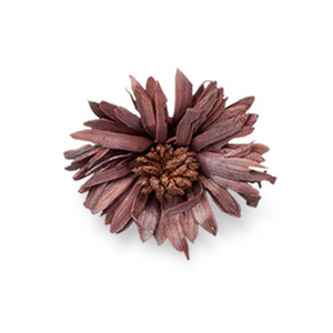 Cut Flower 16