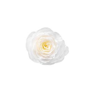 Cut Flower 17