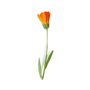 Cut Flower 20