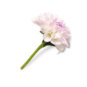 Cut Flower 21