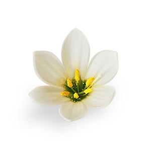 Cut Flower 30