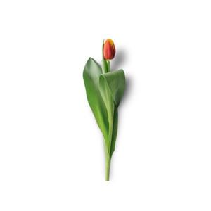 Cut Flower 29