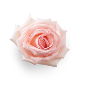 Cut Flower 31