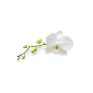 Cut Flower 33