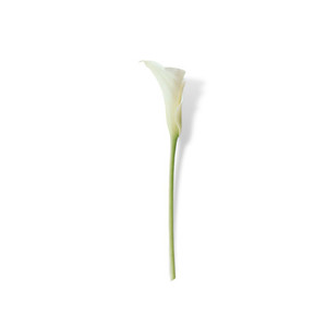 Cut Flower 34