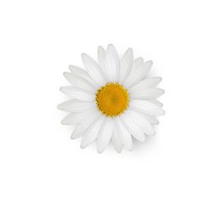 Cut Flower 35