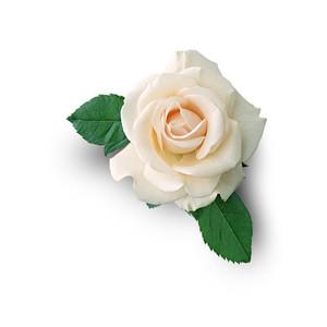 Cut Flower 38