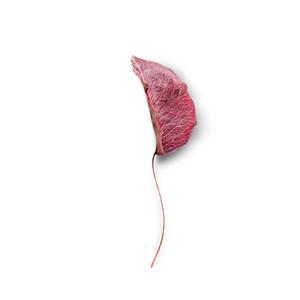 Cut Flower 40