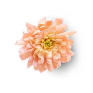 Cut Flower 41