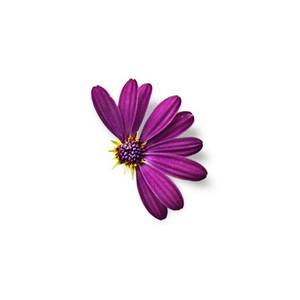 Cut Flower 43