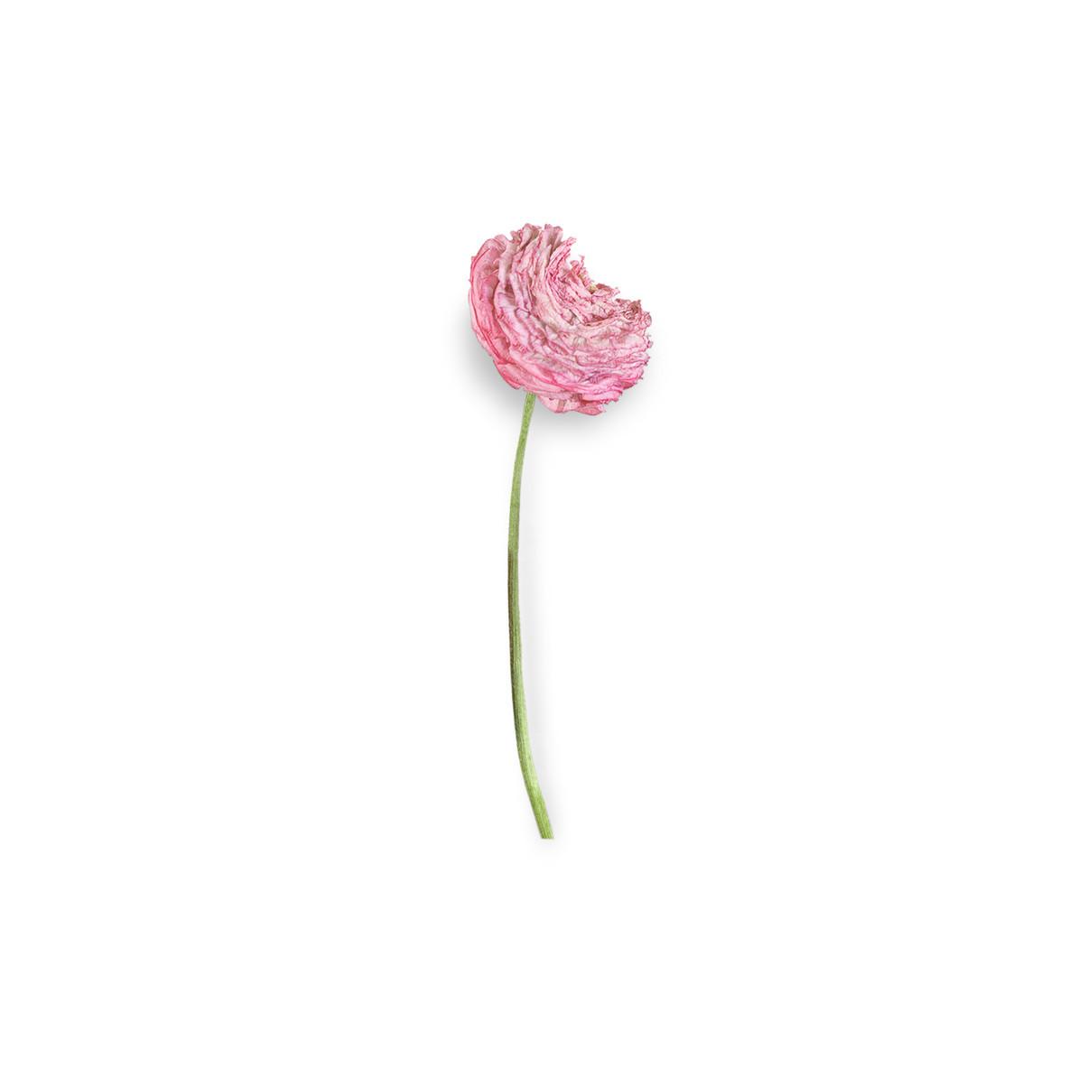 Cut Flower 44