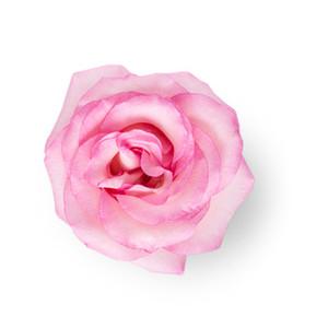 Cut Flower 49