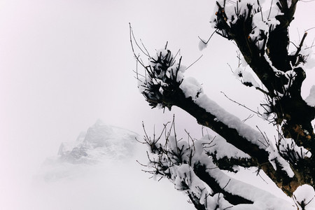 Swiss Alps 4