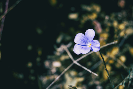 a single small purple flower on the right side of the photo