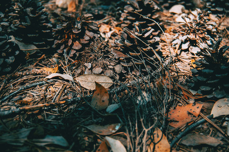 pine cones and needles on the ground of a field