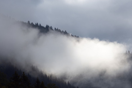 Fog on beautiful forest peaks in the mountains