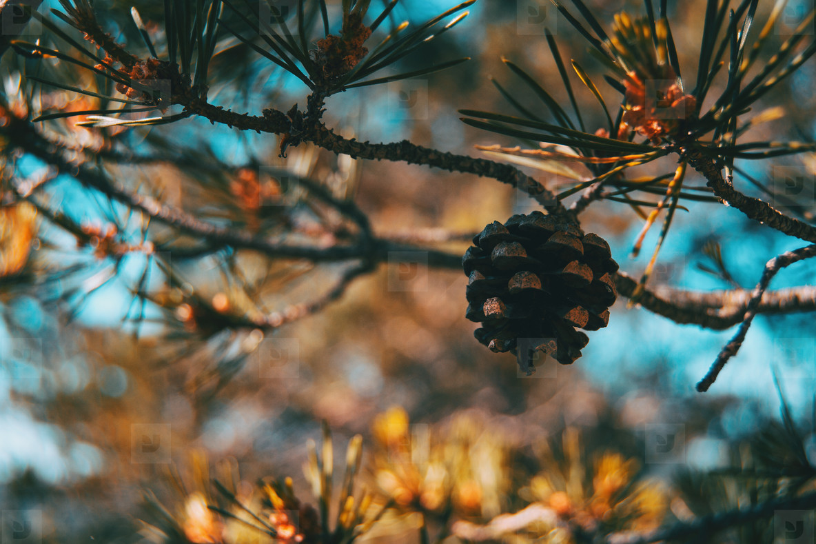 a pine cone on a tree in the middle of nature