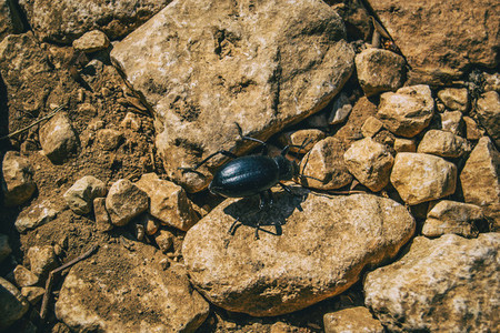 a black beetle on the ground of a field