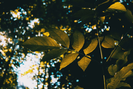 twig with backlit leaves