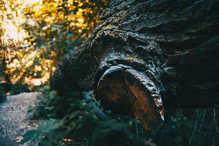 branch cut from fallen trunk