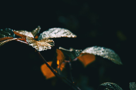 dewy leaves bathed in morning light