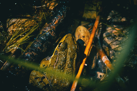 a camouflaged frog resting