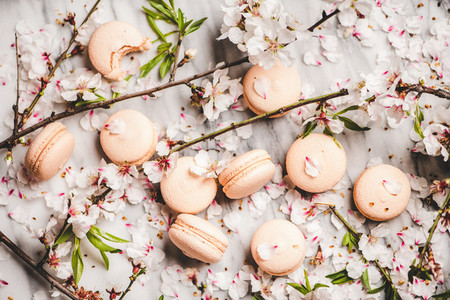 Flat lay of sweet macaron cookies and white blossom flowers