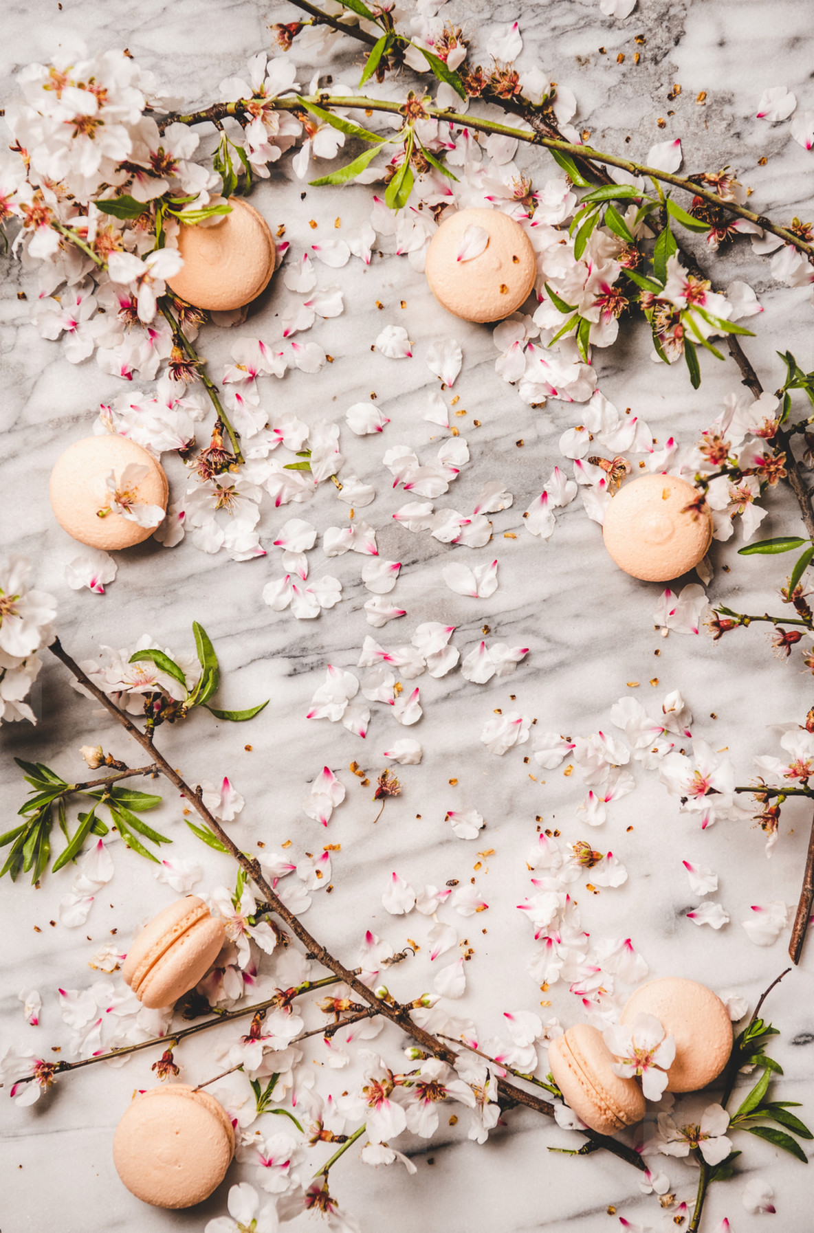 Sweet macaron cookies and white spring blossom flowers  copy space