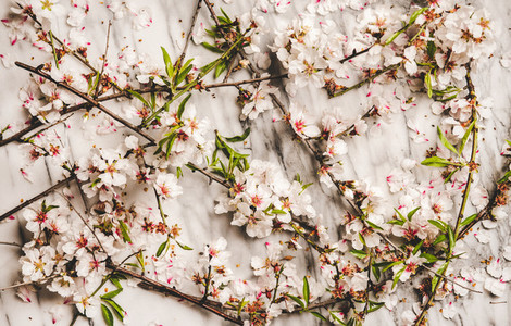 White spring blossom flowers over marble background