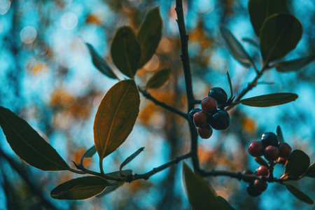 prunus spinosa fruits on a small sunlit branch