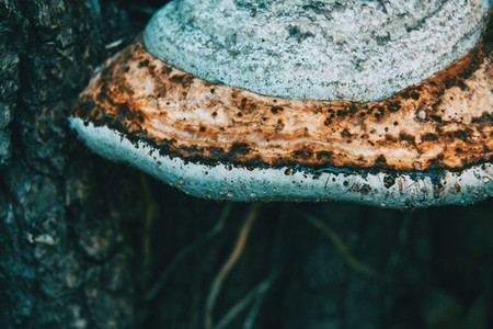 white mushrooms on a trunk