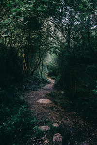small path that goes into the forest
