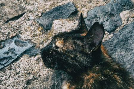 stray cat lying on a street in some town