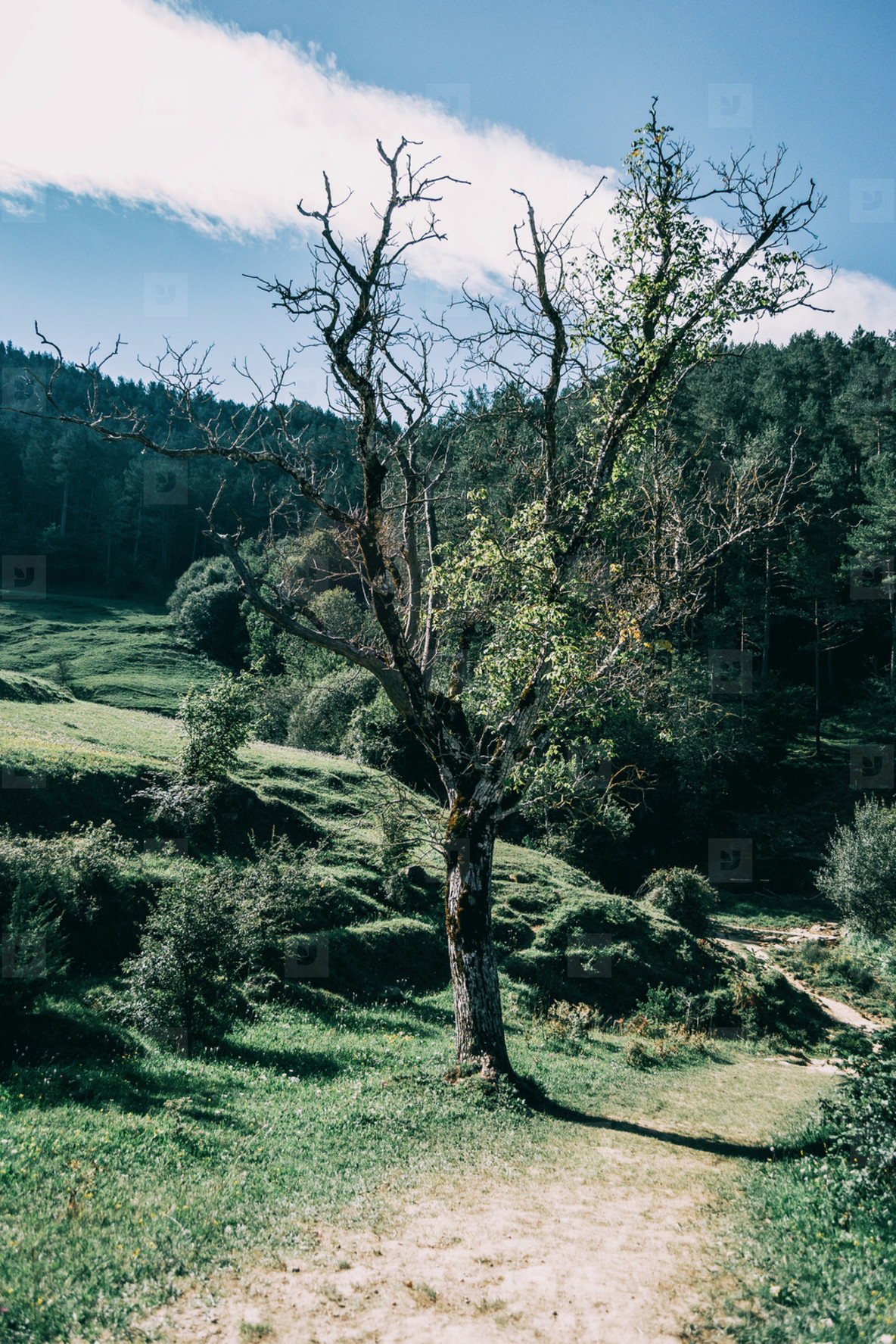 green landscape with many trees in catalonia  spain