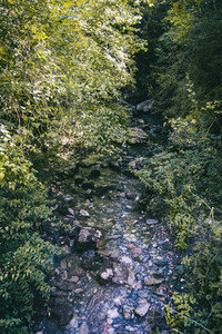 river in the forest surrounded by trees and green bushes in a countryside of catalonia  spain