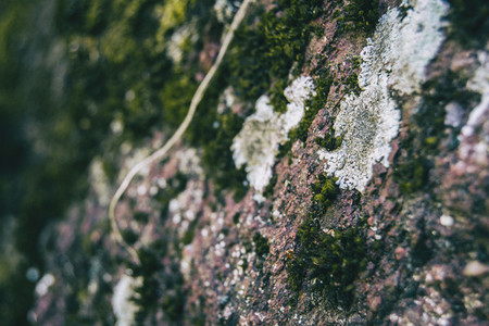 Moss on old stone with dark colors