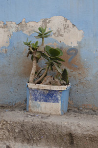 Succulent plant growing in abandoned container