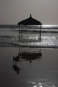 Silhouette happy dog running on sunny ocean beach