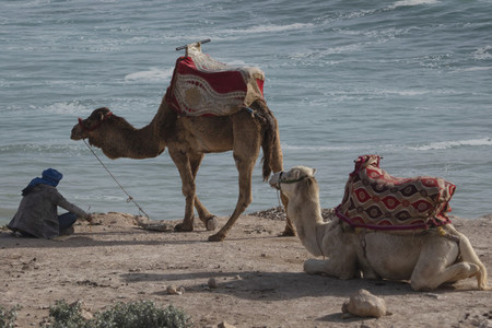 Man resting with camels on ocean beach