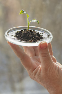 Close up hand holding tiny seedling growing in small tray