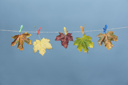 Colorful autumn leaves hanging on clothesline