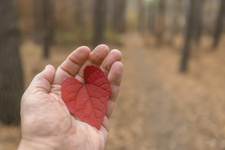 POV Hand holding red heart shape autumn leaf in woods