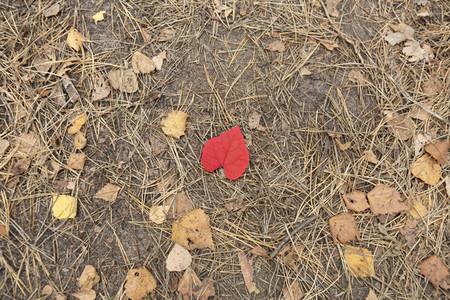 Red heart shape autumn leaf on ground