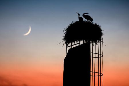 BOGATIC  SERBIA   A storks nest on an abandoned chimney in Bogatic