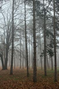 BELGRADE  SERBIA   Autumn fog in Belgrade