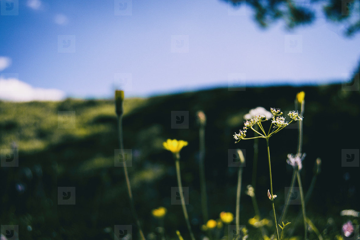 view from below with perspective of several flowers of different shapes and colors in a field