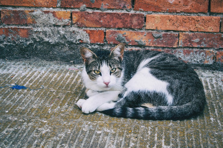 stray cat hiding in a corner of the city