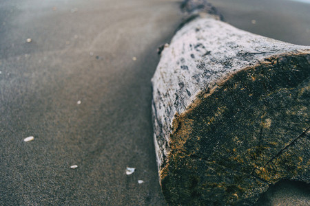 trunk of a tree cut into the sand on the beach seen up close