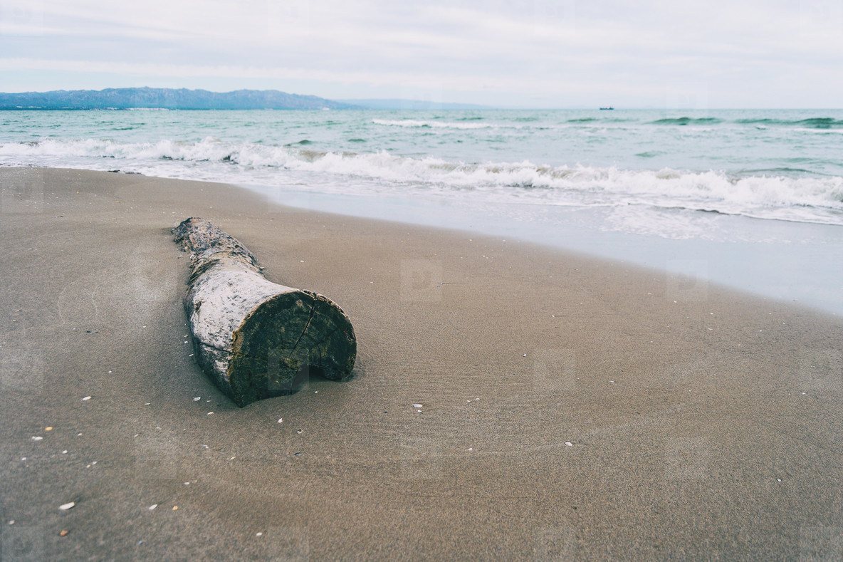 trunk of a tree cut in the sand on the beach